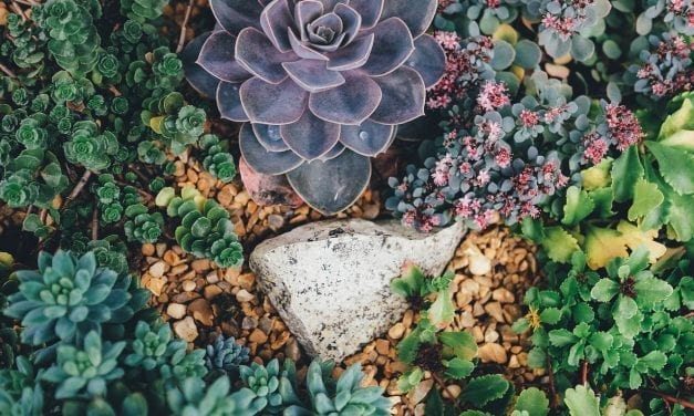 Plant Dictionary