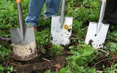 Winter Gardening for Children