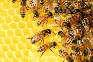 Honey Bees - Life Cycle Video