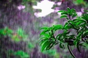 Rain water best for plants
