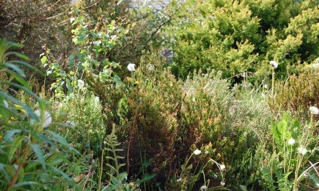 Overgrown Gardens – Nature's Paradise