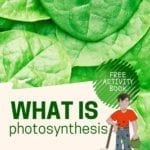What Is Photosynthesis? - Plant Energy