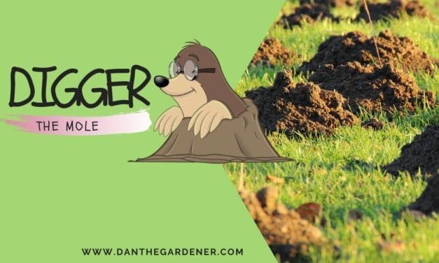 Digger The Mole