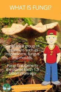 What is Fungi?