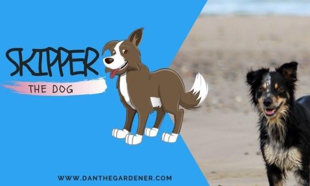 Skipper The Dog