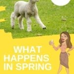 What happens in spring